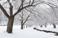 Free Winter Time In Hurd Park, Dover, NJ Stock Photos - 108125553