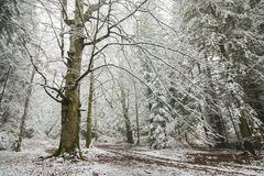 Winter time inside the forest on a foggy day Stock Photos