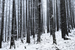 Winter time inside the forest on a misty day Stock Photography