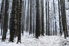 Winter time inside the forest on a misty day Royalty Free Stock Photos