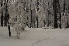 Winter time inside the forest on a misty day Royalty Free Stock Photography