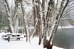 Winter Time At The Lake. Snow covered picnic benches and trees at a small lake Stock Image