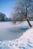 Winter time on a lake. Tree on a lake bank during winter Royalty Free Stock Photography