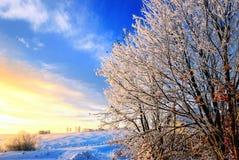 Winter time landscape Stock Photo