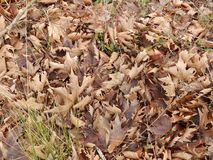 Fallen brown leaves stock photo