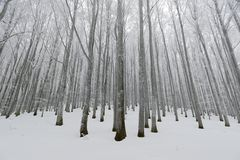 Winter time. Magical forest in early winter time Royalty Free Stock Photo