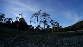 Winter time. Old pine trees on the Mediterranean beach Stock Photos