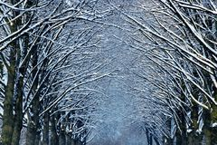 Winter time in park Royalty Free Stock Images