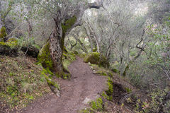 Winter Time Pinnacles National Park Forest Trail California USA Stock Photography