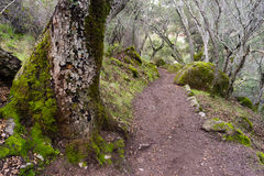 Winter Time Pinnacles National Park Forest Trail California USA Royalty Free Stock Photography