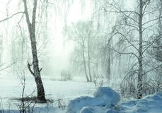 Winter time Stock Photography