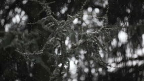 Winter time snowing stock footage