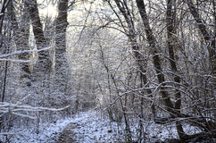 Winter time view Royalty Free Stock Photos