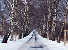 Winter. Time - white trees alley Stock Photo