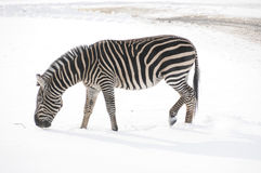 Winter time in zoo Stock Photos