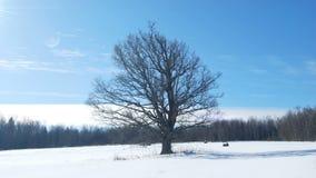 Winter timelapse stock video footage