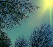 WInter  to Spring. Color changes to highlight transitioning seasons Royalty Free Stock Photography