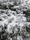 Winter& x27; tocco di s fotografia stock libera da diritti