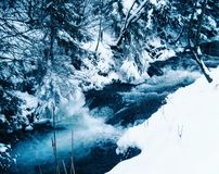 Winter torrent. Fast torrent in Carpathian mountains, Ukraine Royalty Free Stock Image
