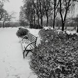 Winter town. Bench in Winter Park in the morning Royalty Free Stock Photo