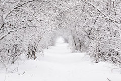 Winter trace in forest. Beautiful winter road in an incredible forest Royalty Free Stock Images