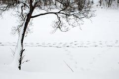 Winter traces Stock Photo