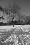 Winter Tracks Royalty Free Stock Image