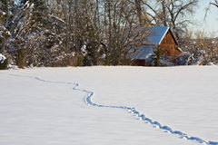 Winter Tracks. A snow covered field with animal tracks leading to the woods near a barn royalty free stock photo