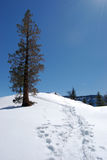 Winter Trail. Above Yosemite falls on a winter day at Yosemite national park Stock Image