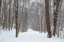 Winter Trail Royalty Free Stock Image