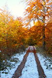 Winter trail in the forest Royalty Free Stock Image