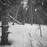 Winter trail. Fresh snowshoe tracks in virgin snow Stock Image
