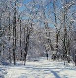 Winter Trail Morning Stock Photos