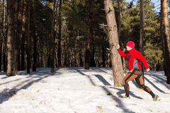 Winter trail running: man takes a run on a snowy mountain path in a pine woods. Royalty Free Stock Image