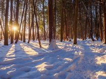 Winter trail at sunrise Stock Photography