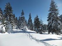 Winter trail between the trees. Winter scene on the mountain with trail on the snow between the fir trees on Bucegi Mountains Romania Diham area Royalty Free Stock Photos