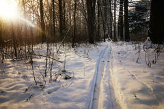 Winter trails in the forest Stock Image