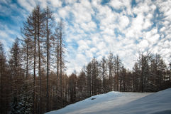 Winter trees in the snow Royalty Free Stock Photography