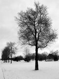 Winter Tree 01. A line of bare winter trees in a park stock photos