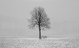 Free Winter Tree Royalty Free Stock Photos - 102712418