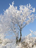 Winter Tree. Snow-covered trees against blue sky Royalty Free Stock Photos