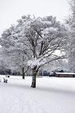 Winter Tree. A snow-laden tree following all night snow fall in parkland, St Albans, Hertfordshire, England. Moderate space for copy if required Royalty Free Stock Image