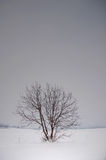Winter tree Stock Images