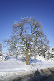 Winter tree. Royalty Free Stock Photography