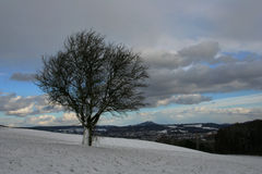 Winter tree. One tree on the winter field stock images