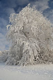 Winter tree. Tree totally covered by snow Royalty Free Stock Photos