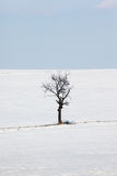 Winter tree. Isolated alone tree on the winter background with blue sky Royalty Free Stock Photo