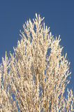Winter tree. With a blue sky Stock Image