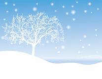 Winter tree. A snowy tree in winter Royalty Free Stock Image