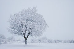 Winter Tree. Lonely tree in winter on a snowy field Royalty Free Stock Image